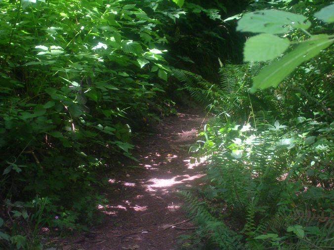 Forest Path2